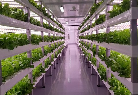 Indoor Farming Market Analysis Report 2021-2026: Global Size, Share, Growth, Industry Demand,  COVID-19 Impact, and Forecast