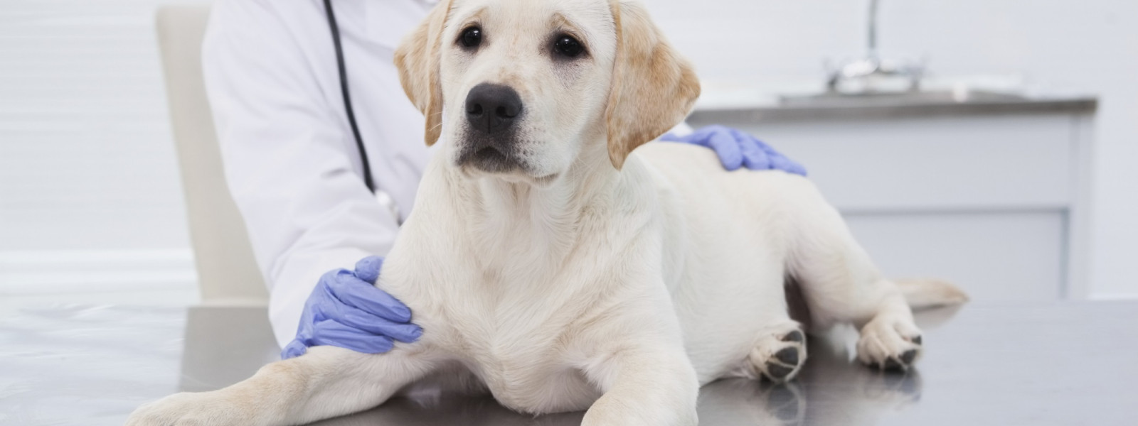 Animal Health Market 2021-2026: Industry Share, Size, Growth, Upcoming Trends, Key Players Analysis, Outlook and Global Research Report