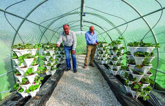 Qatar Greenhouse Market Report 2021-2026: Size, Growth, Share, Competitive Analysis, Key Players, Trends, Industry Demands and Outlook