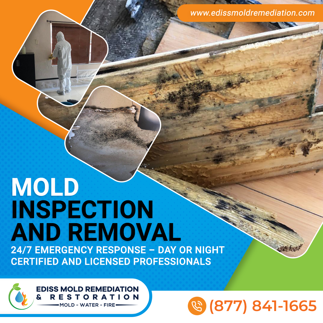 Ediss Mold Remediation Launching in South Florida for Water Damage and Mold Restoration