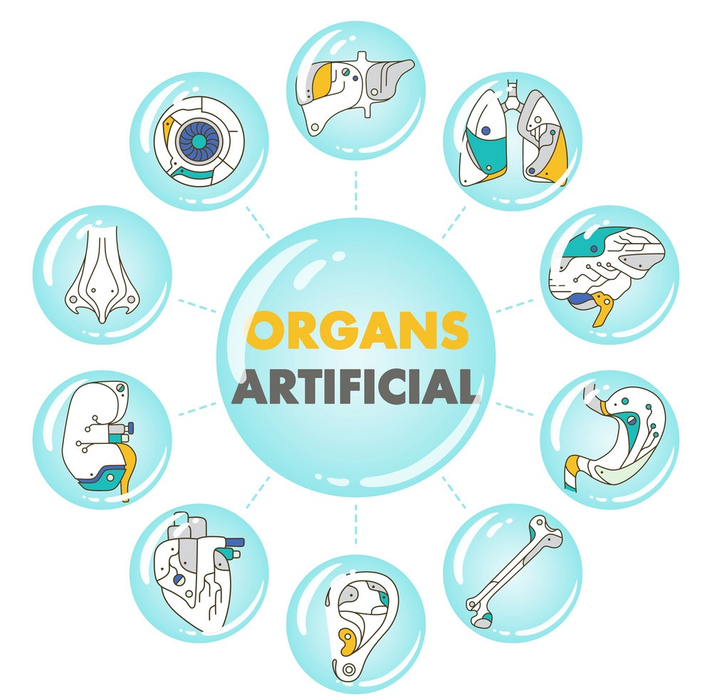 Artificial Organs Market Witness an Outstanding Growth and Strong Revenue and Forecast to 2031