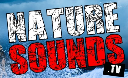 High-Quality Nature Sound Videos For Relaxation Now On Naturesounds