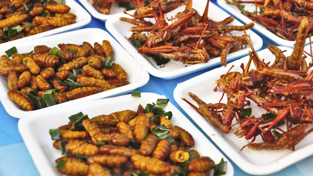 The Edible Insects Market: Meticulous Research® Reveals Why This Market is Expected to Grow at a CAGR of 26.5% from 2020 to 2027 to reach $4.63 billion by 2027