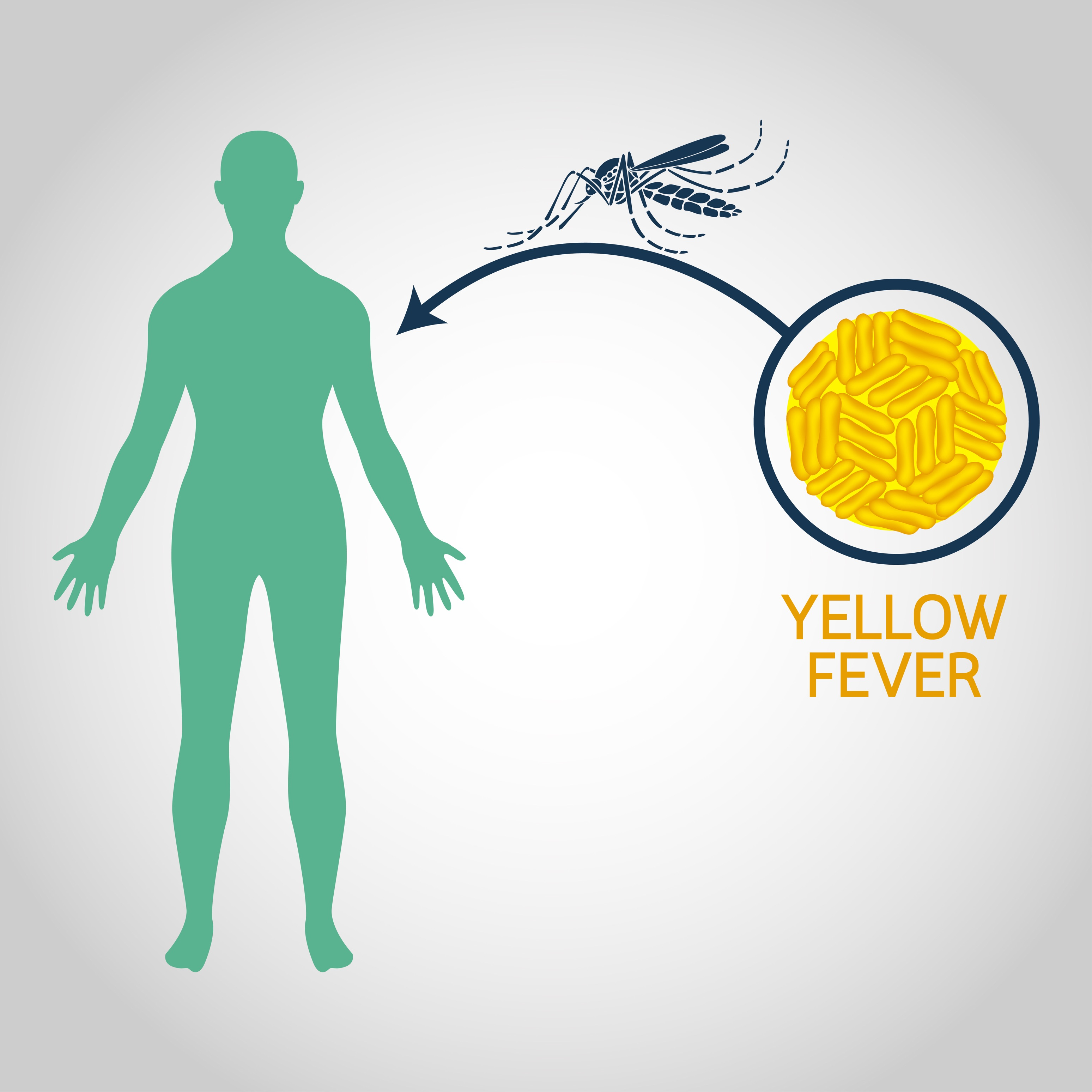Yellow Fever Market Size, Growth Trends, Share, Regional Outlook Forecast by 2031