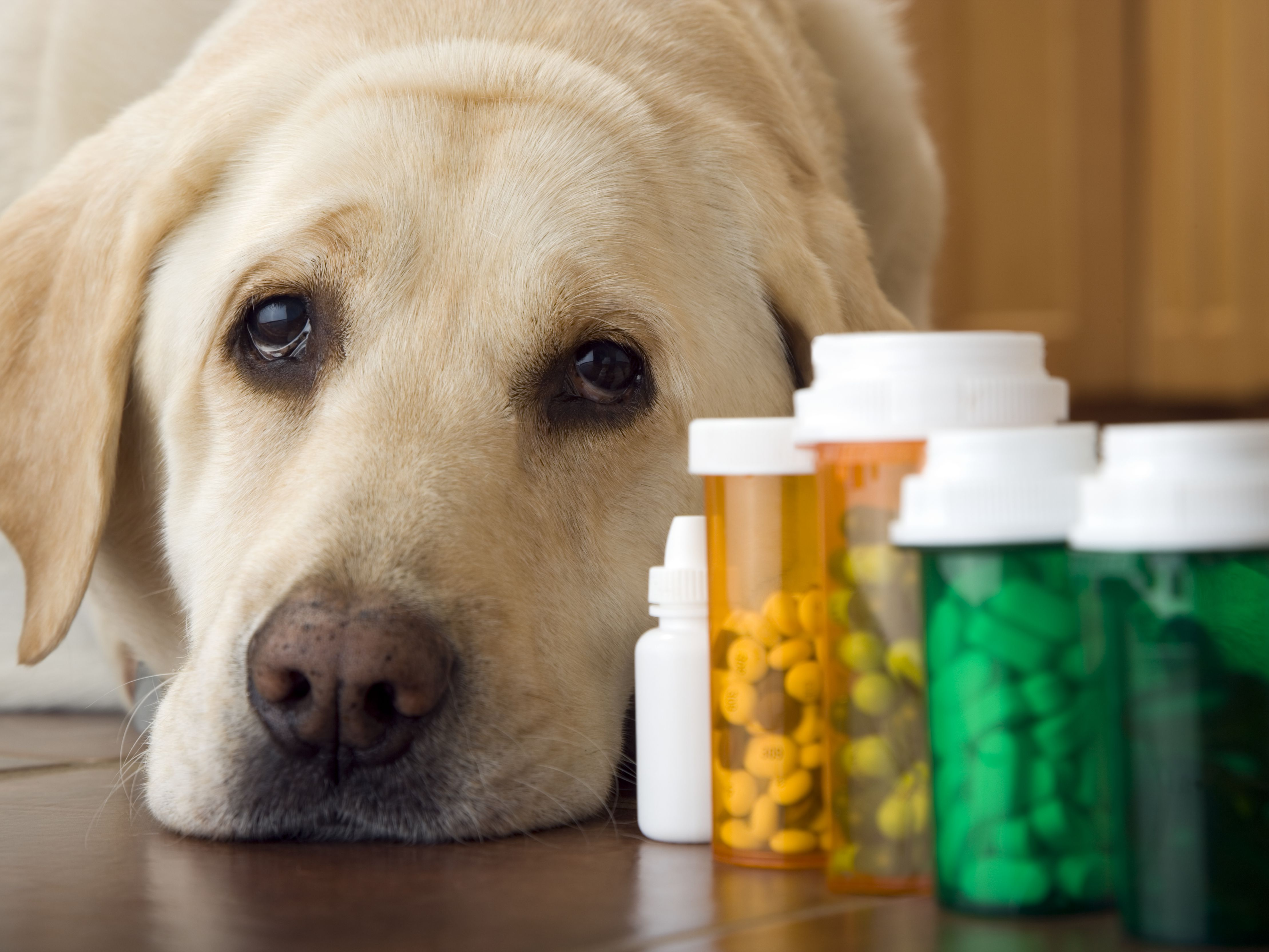 Pet Dietary Supplement Market Size Expected to Reach USD 6.13 BN By Forecast Year 2031