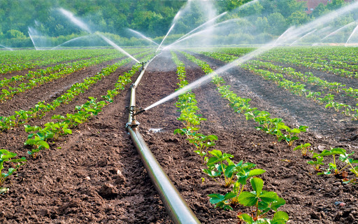 Specialty Fertilizers Market: Size, Share, Trends, Growth Analysis, And Forecast 2021-2031