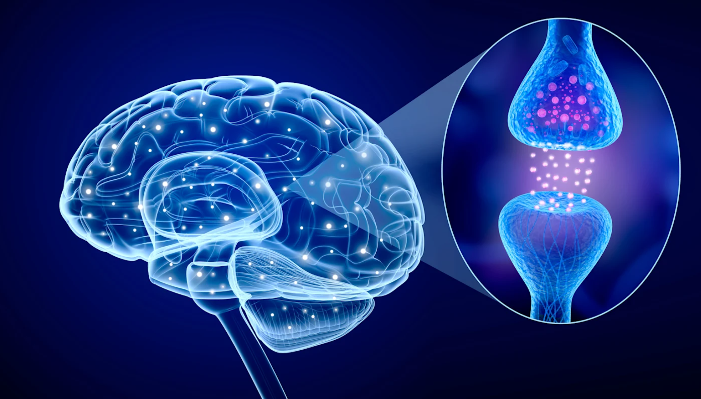 Neuroscience discovery revolutionizes treatment of anxiety and panic attacks